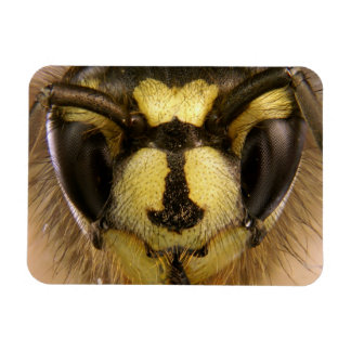Common Wasp Vespula Vulgaris Magnet