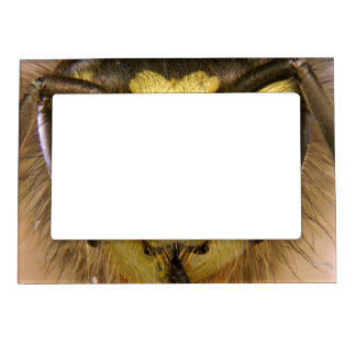 Common Wasp Vespula Vulgaris Magnetic Frame