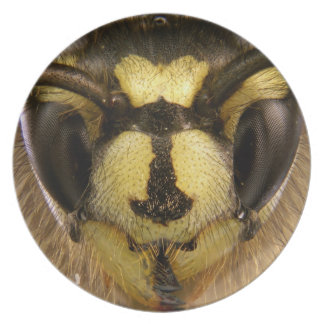 Common Wasp Vespula Vulgaris Melamine Plate