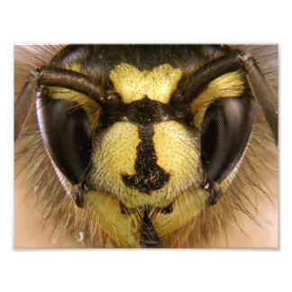 Common Wasp Vespula Vulgaris Photographic Print