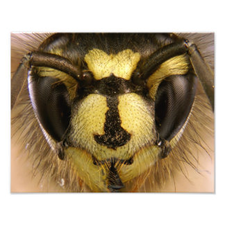 Common Wasp Vespula Vulgaris Photo Art