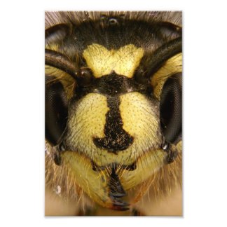 Common Wasp Vespula Vulgaris Photograph