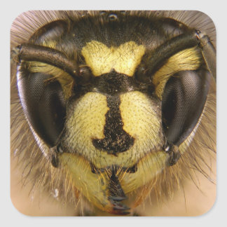 Common Wasp Vespula Vulgaris Square Sticker