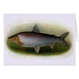 Common Whitefish of Lake Erie Greeting Card