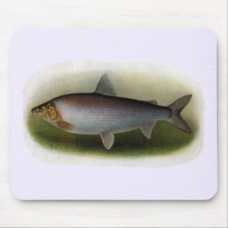 Common Whitefish of Lake Erie Mousepads