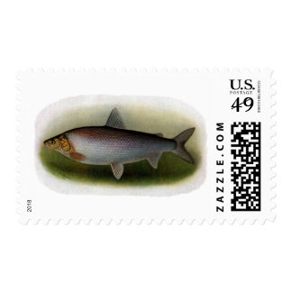 Common Whitefish of Lake Erie Stamp