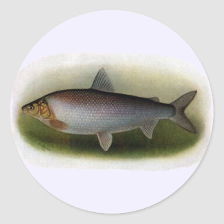 Common Whitefish of Lake Erie Sticker