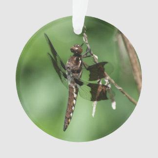 Common Whitetail Ornament