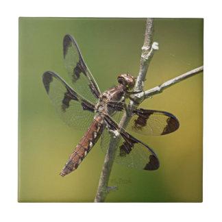 Common Whitetail Skimmer Dragonfly Female. Ceramic Tile