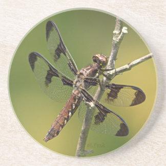 Common Whitetail Skimmer Dragonfly Female Beverage Coaster