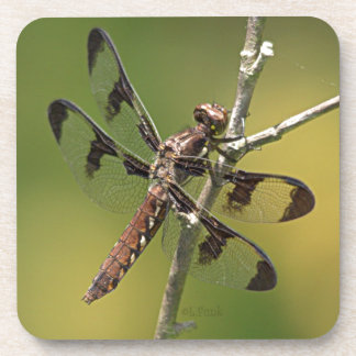 Common Whitetail Skimmer Dragonfly Female Drink Coaster