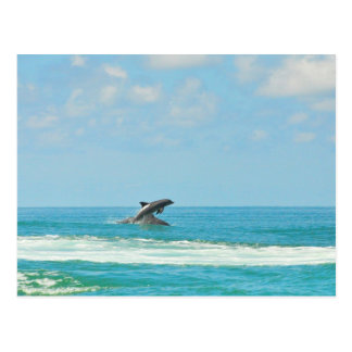 Common Wild Dolphins Playing In Gulf FL Postcard