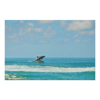 Common Wild Dolphins Playing In Gulf FL Poster