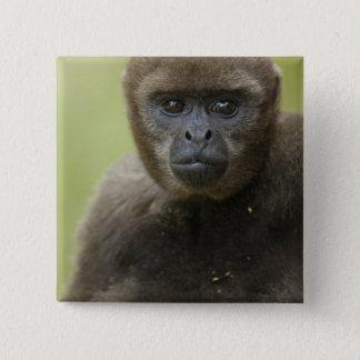 Common Woolly Monkey Lagothris lagothricha), Button