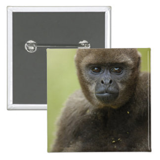 Common Woolly Monkey Lagothris lagothricha), Pinback Buttons