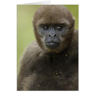 Common Woolly Monkey Lagothris lagothricha), Greeting Card