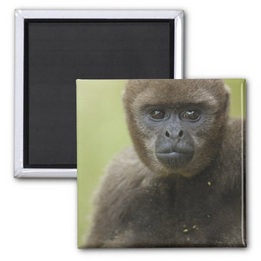 Common Woolly Monkey Lagothris lagothricha), Refrigerator Magnets