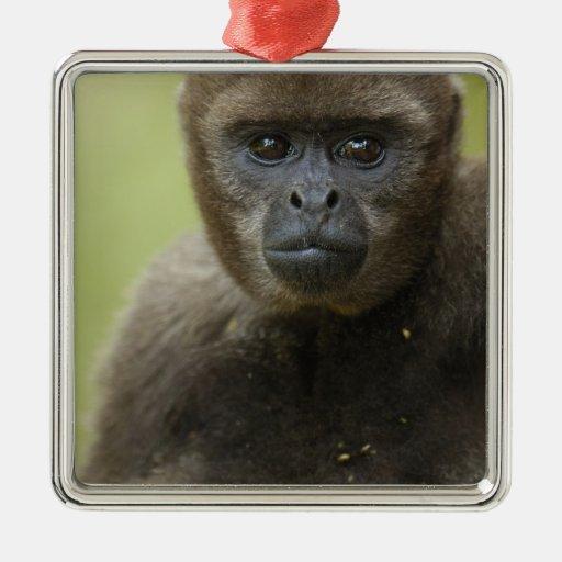 Common Woolly Monkey Lagothris lagothricha), Christmas Ornament