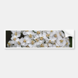 Common yarrow (Achillea millefolium) Bumper Sticker