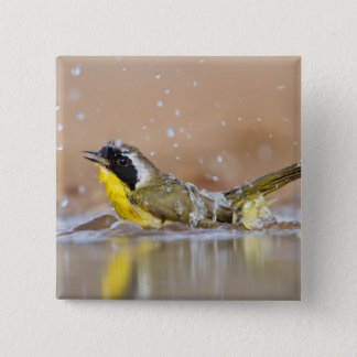 Common yellowthroat bathing button