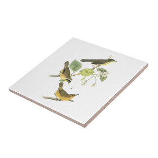 Common Yellowthroat by Audubon Small Square Tile