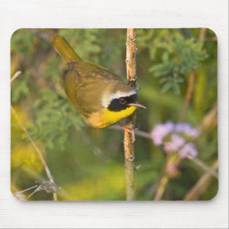 Common Yellowthroat Geothlypis trichas) male, Mouse Pad