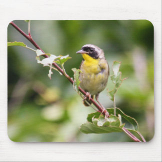 Common Yellowthroat Mouse Pad