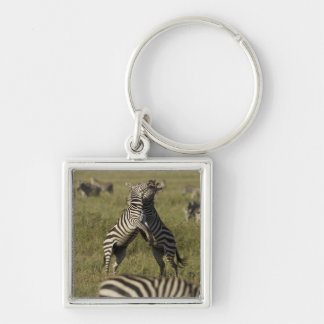 Common Zebra dominance behavior Key Chains
