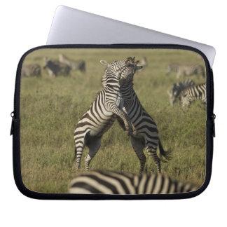 Common Zebra dominance behavior Laptop Computer Sleeve