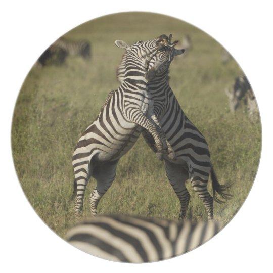 Common Zebra dominance behavior Melamine Plate