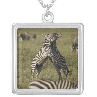Common Zebra dominance behavior Pendants