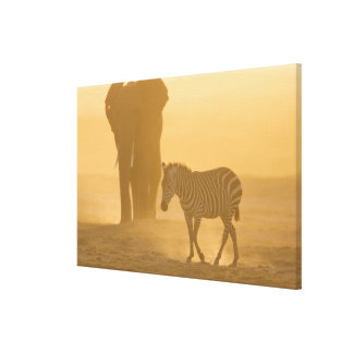 Common Zebra, Equus burchelli, and Elephant, Canvas Print