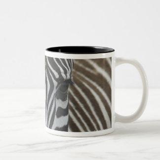 Common Zebra (Equus quagga), close up Two-Tone Coffee Mug