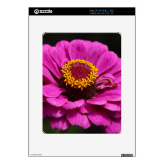 Common zinnia (Zinnia elegans) Decals For The iPad