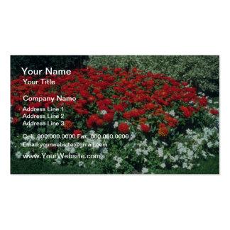 Common Zinnia Zinnia Elegans flowers Business Card