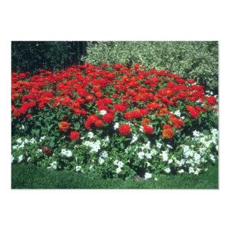 Common Zinnia (Zinnia Elegans) flowers 5x7 Paper Invitation Card
