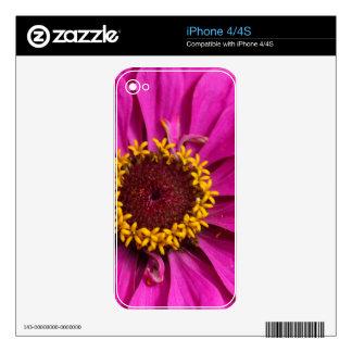 Common zinnia (Zinnia elegans) Skins For iPhone 4