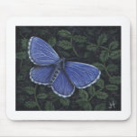 Commonblue-butterfly_J Horsler Mouse Pad