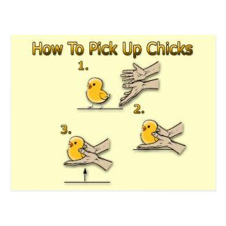 Cómo coger direcciones divertidas de los polluelos tarjeta postal