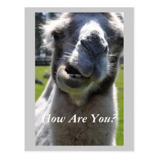 ¿Cómo está usted? Postal
