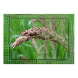 Cómo la hierba crece señales tarjetas de visita grandes