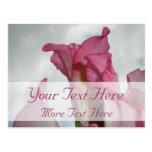 Como la postal rosada cristalina del gladiolo