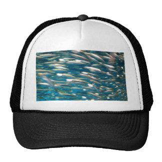 como las sardinas gorros bordados