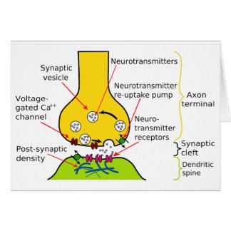 Cómo las señales del nervio se envían con sinapsis felicitaciones