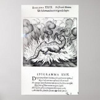Como las vidas del Salamander en fuego Posters