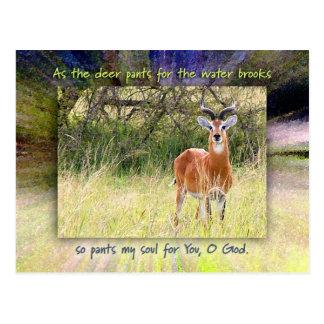 Como los ciervos jadea para los arroyos del agua… tarjeta postal