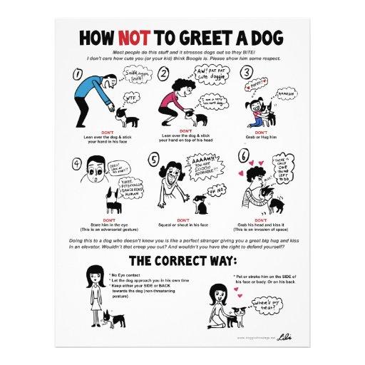 """Cómo no saludar un perro - 8,5"""" x 11"""" aviadores folleto 8.5"""" x 11"""""""