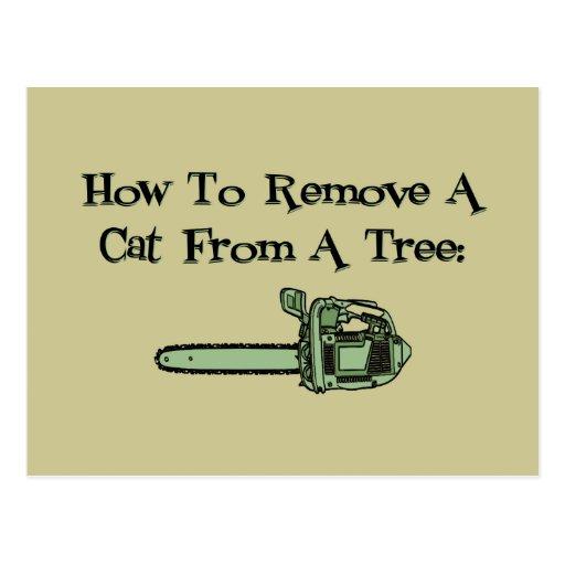 Cómo quitar un gato de un árbol postales