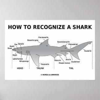 Cómo reconocer un tiburón (humor de la biología) póster