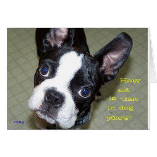 ¿Cómo viejo en años del perro? Felicitacion